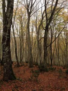 Bracciano, nei boschi alla ricerca di vecchie mura.